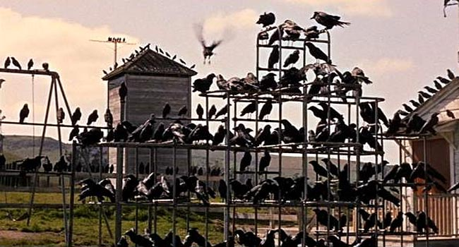 The Birds - A Murder of Crows scene