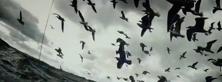 The Birds in Leviathan