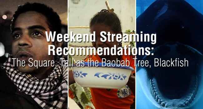 Weekend Streaming Recommendations: The Square, Tall as the Baobab Tree, Blackfish