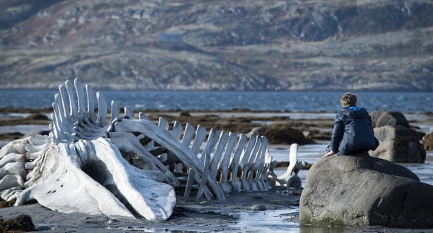 Leviathan 2014 film
