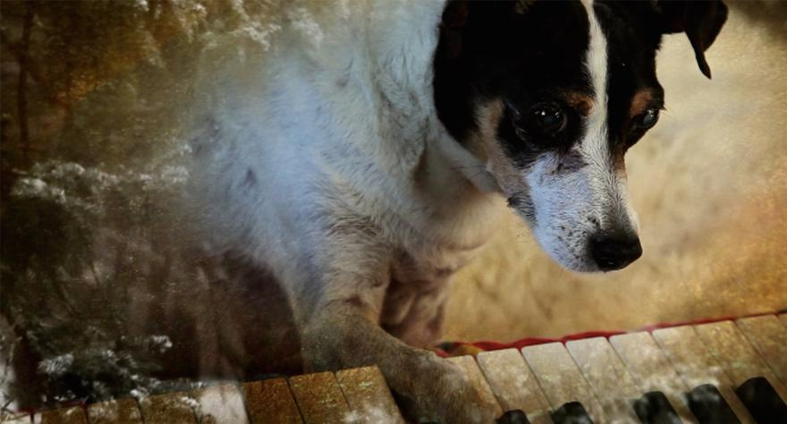 NYFF 2015: Heart Of A Dog