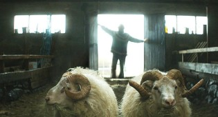Rams (Sundance Review)